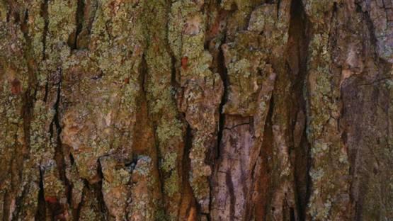 An Whitlock - bark-bark-bark, 2016 (detail)