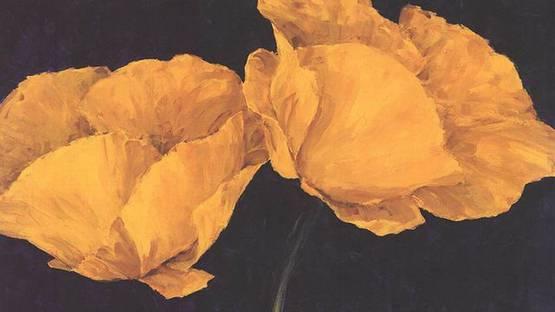 Charles Belle - Ranunculus Flowers