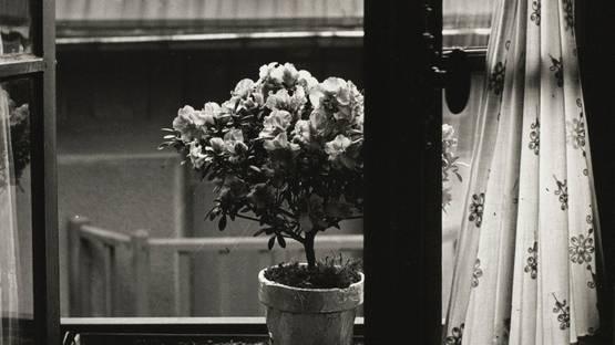Emmanuel Sougez - Etude de Fleurs (detail), 1934 - image via sothebyscom