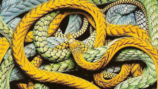 Guido Mocafico - Snakes series (detail), photo credits of the artist
