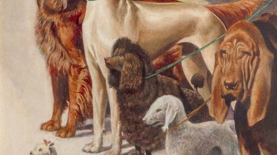 Josh Rutherford Boyd - Best in Show, ca 1930 (detail)