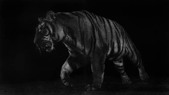 Mark Evans - Stealth Tiger, 2017