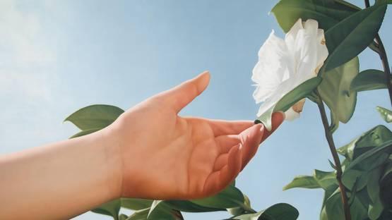 Mustafa Hulusi - Untitled, White Lily and Hand (detail), 2005, photo via bidoun.org