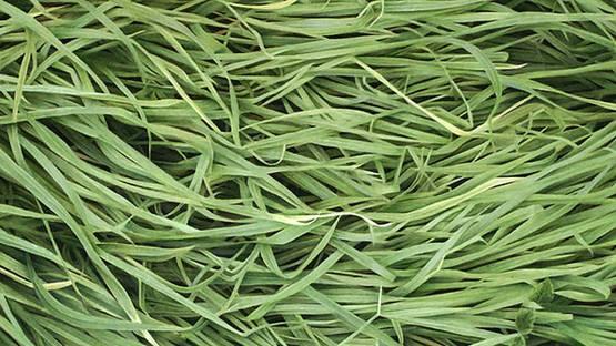 Natan Pernick - Grass (detail) - photo credits of the artist