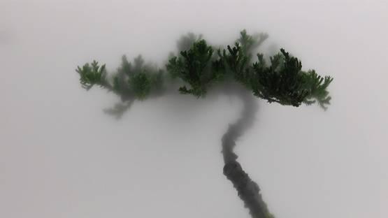 Still Life 01-Pine - Courtesy of the artist