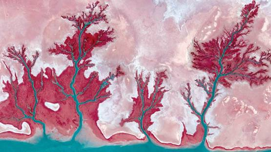 Tree-Rivers-3-Kuwait-2013-cm-45x72-3-of-9