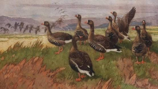 Winifred Austen - Wild Geese on the Marshes (detail)