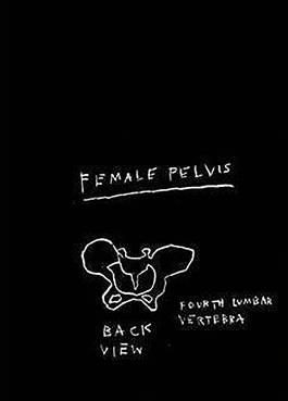 Jean-Michel Basquiat - Anatomy, Female Pelvis Back View, 1982