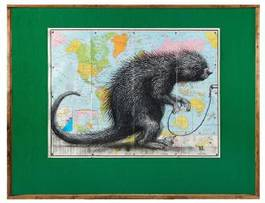 ROA - South American Porcupine