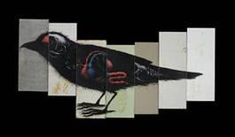 ROA - Sparrow