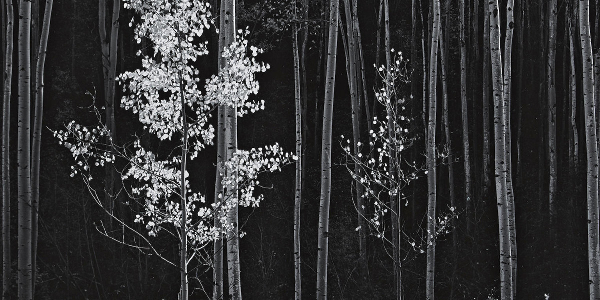 Ansel Adams - Aspens, Northern New Mexico, 1958 (detail)