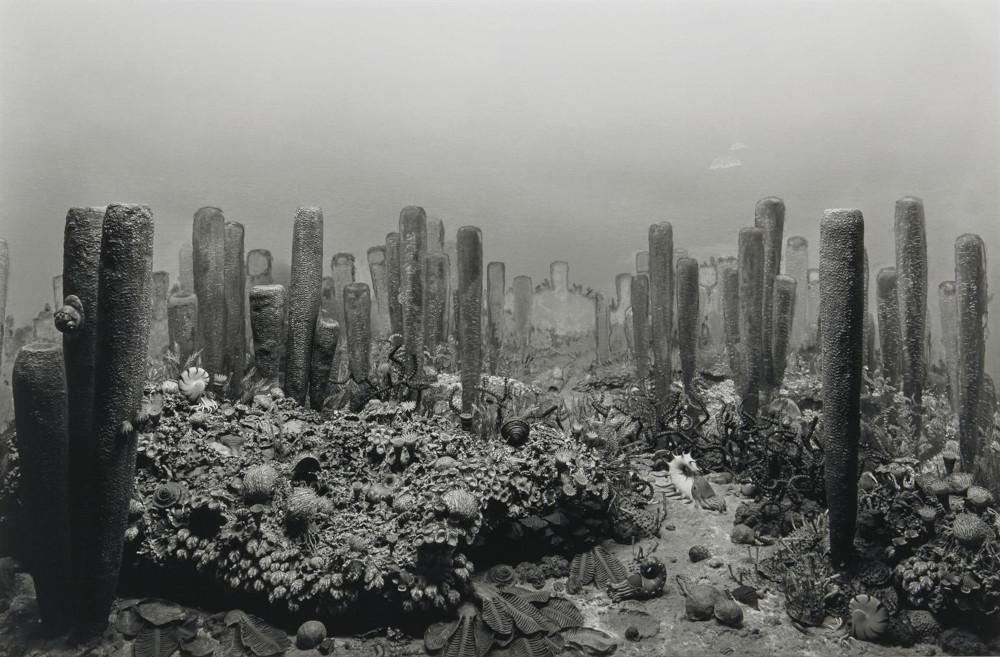 Hiroshi Sugimoto - Permian Period, 1992 (Detail)