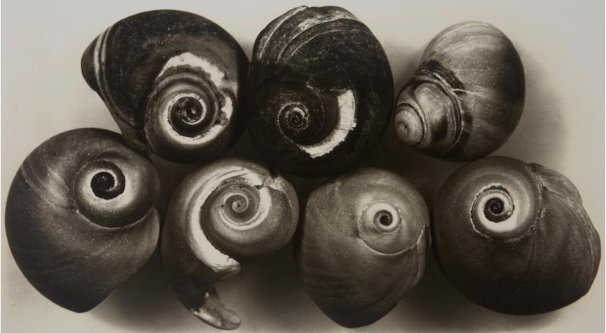 Irving Penn - 7 Shells (New York, May 2, 2002)
