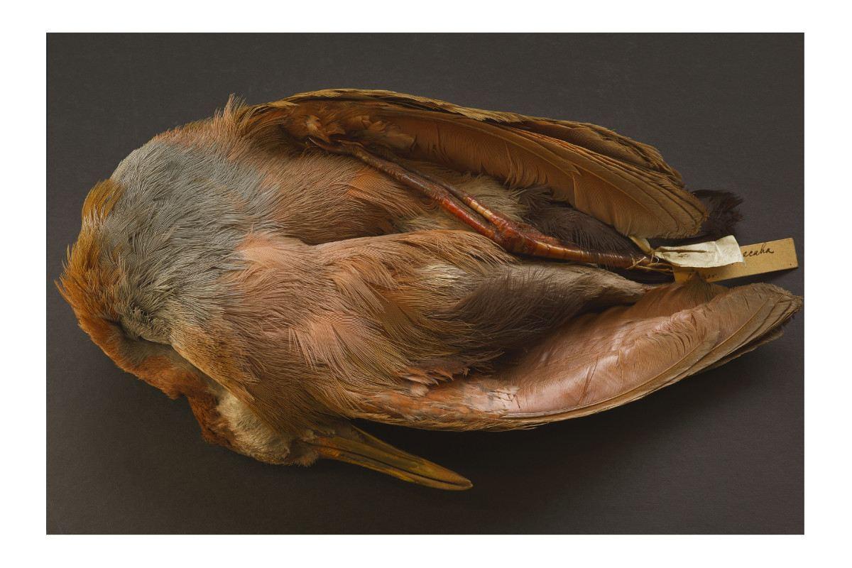 Annie Leibovitz - Charles Darwins bird specimen
