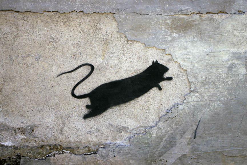 Blek Le Rat - Ratical