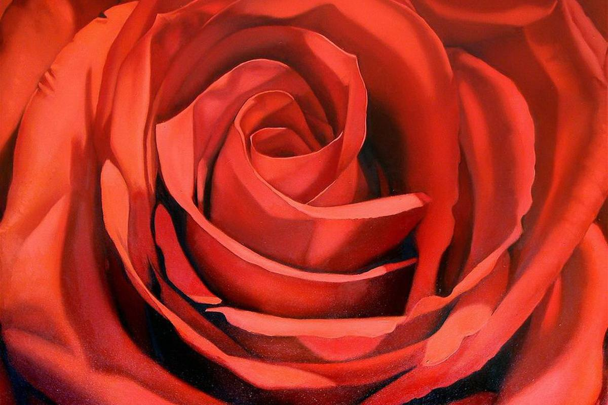 Margaret Morrison - Red Rose_
