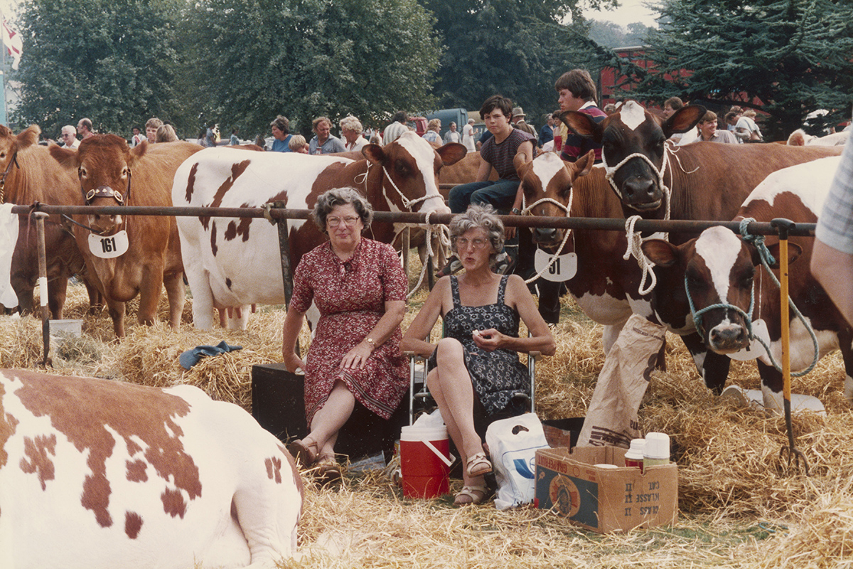 Shirley Baker - Untiled (women with cows), 1983