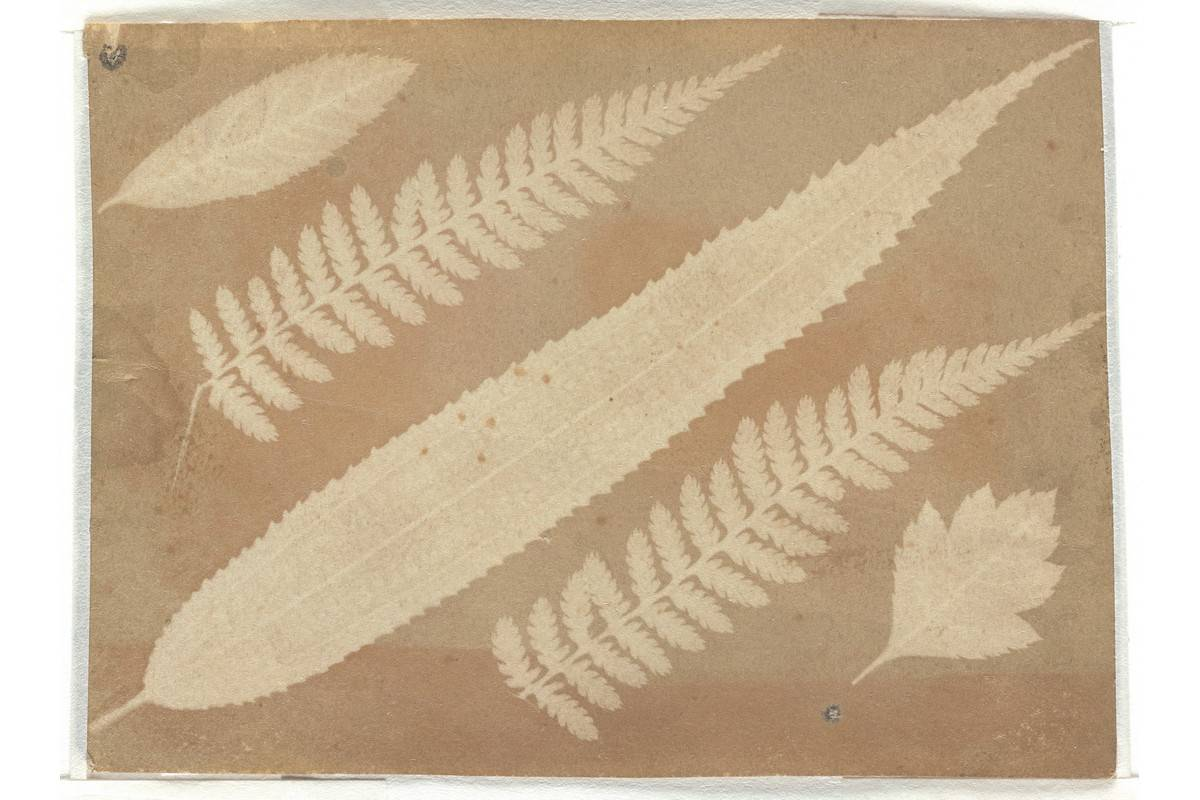William Henry Fox Talbot - Leaves and Fern