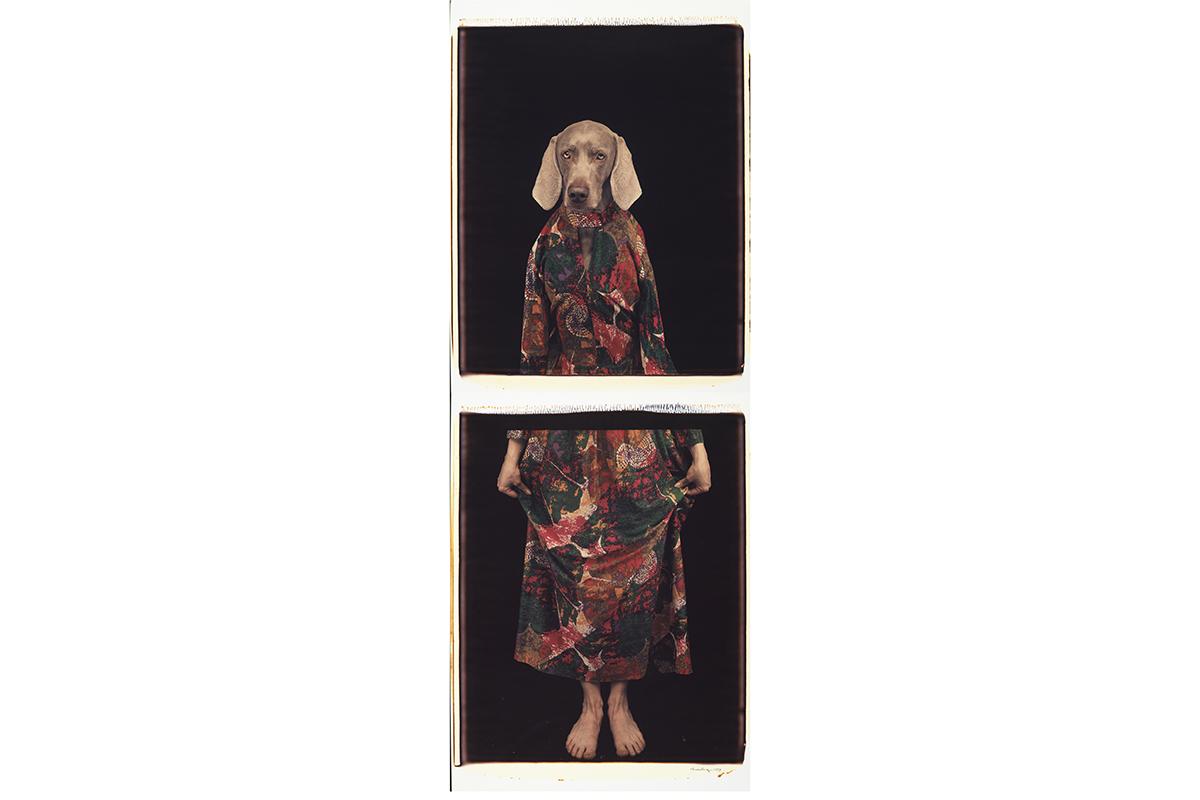 William Wegman - Dressed from Below, 1994