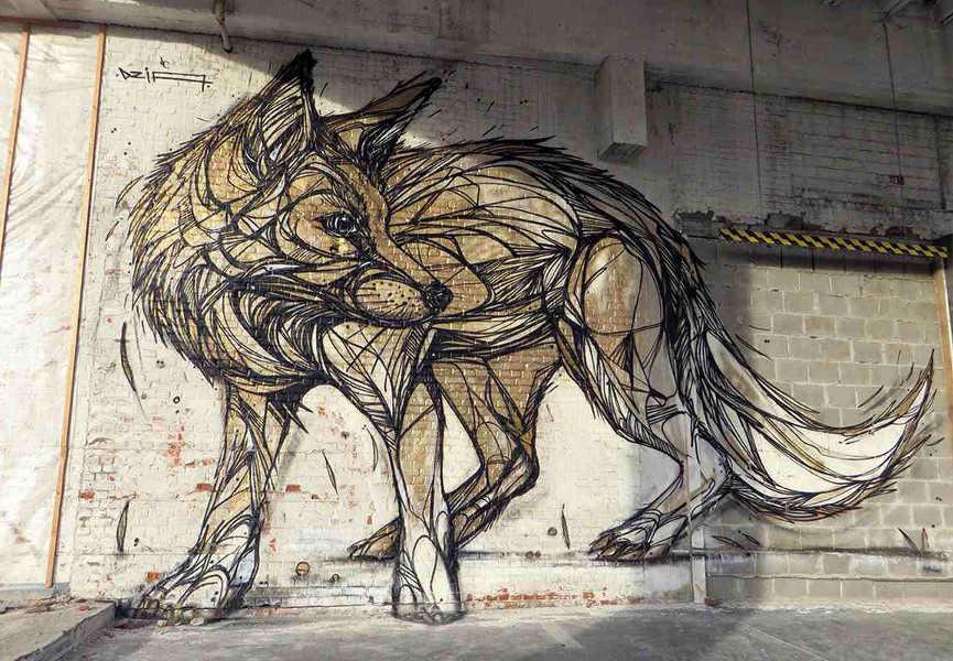 DZIA - Gold Fox, Belgium, 2015