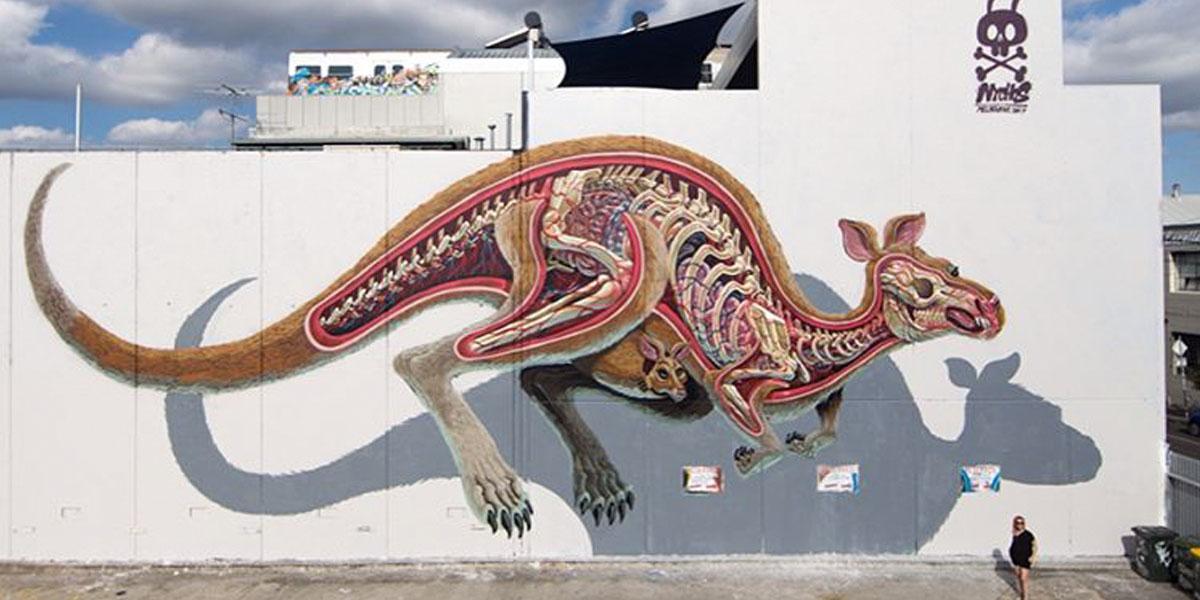 Nychos-Anatomy-of-a-Kangaroo-1